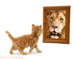 image of cat and lion in mirror