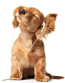 image of puppy headphones