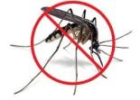image mosquito