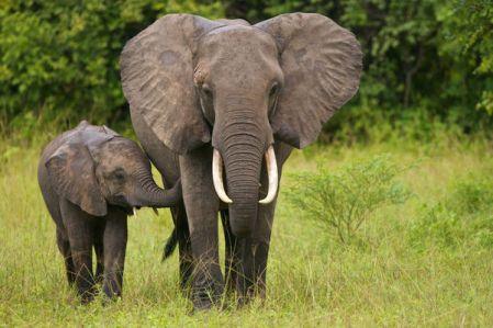 image-cute-elephant
